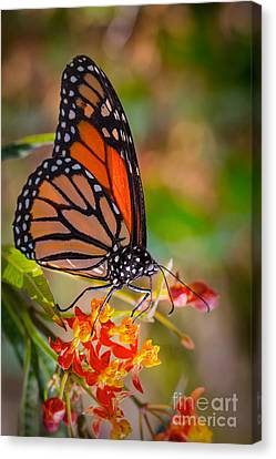 Hello Butterfly Canvas Print by Ana V Ramirez