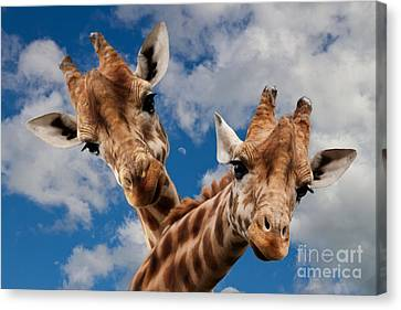 Canvas Print featuring the photograph Hello by Christine Sponchia