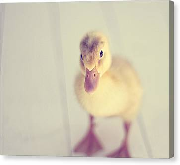 Hello Ducky Canvas Print by Amy Tyler
