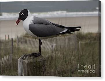 Hello Friend Seagull Canvas Print