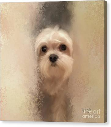 White Maltese Canvas Print - Hello by Lois Bryan