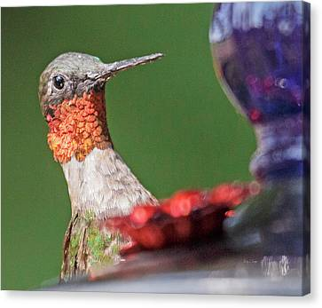 Feeding Canvas Print - Hello There by Betsy Knapp