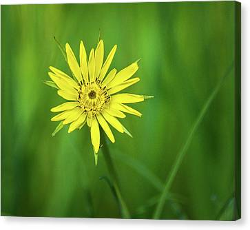 Canvas Print featuring the photograph Hello Wild Yellow by Bill Pevlor