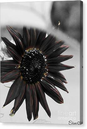 Hells Sunflower Canvas Print by September  Stone