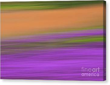 Canvas Print featuring the photograph Henbit Abstract - D010049 by Daniel Dempster