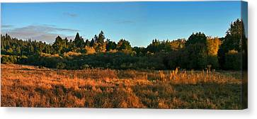 Henry Cowell Sunset Canvas Print