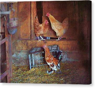 Hens - Barn Canvas Print by Nikolyn McDonald