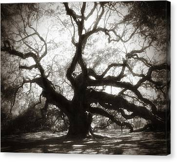 Live Oaks Canvas Print - Her Majesty by Amy Tyler