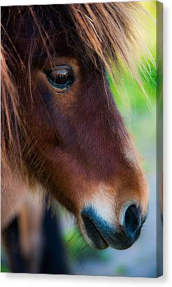 Her Melancholic Eyes Canvas Print