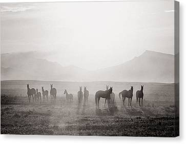 Animal Canvas Print - Herd #3 by Artur Baboev