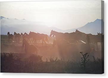 Herd #34 Canvas Print