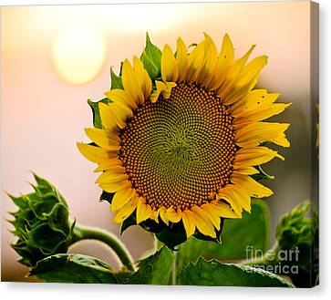 Here Comes The Sun Canvas Print by Nick  Boren
