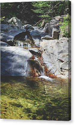 Falling Water Creek Canvas Print - Here I Soak You In by Laurie Search