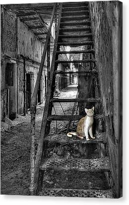 Here Kitty Kitty Kitty... Canvas Print