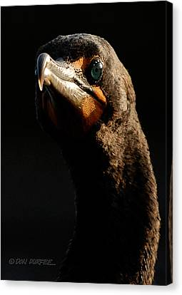 Canvas Print featuring the photograph Here's Lookin At You by Don Durfee