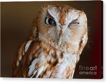 Here's Looking At You Canvas Print by A New Focus Photography