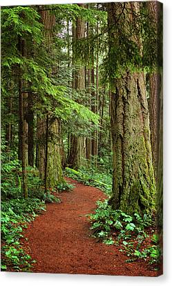 Heritage Forest 2 Canvas Print by Randy Hall