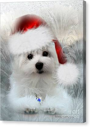 Hermes The Maltese At Christmas Canvas Print by Morag Bates