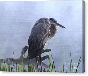 Heron 5 Canvas Print