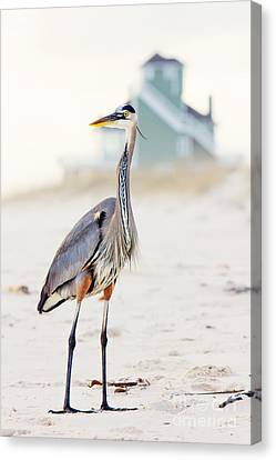 Heron And The Beach House Canvas Print by Joan McCool