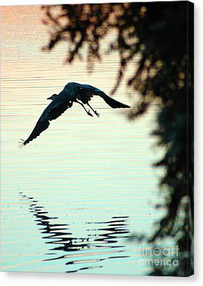 Heron At Dusk Canvas Print by Clayton Bruster
