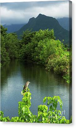 Heron At Kawainui Marsh Canvas Print by Charmian Vistaunet