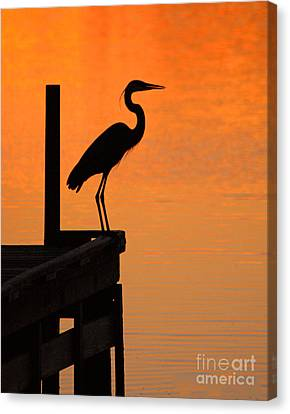 Heron At Sunset Canvas Print by Clayton Bruster