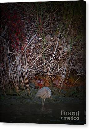 Heron Fishing Canvas Print