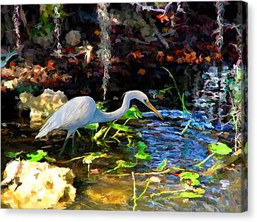 Heron In Quiet Pool Canvas Print by David  Van Hulst