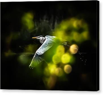 Heron Launch Canvas Print
