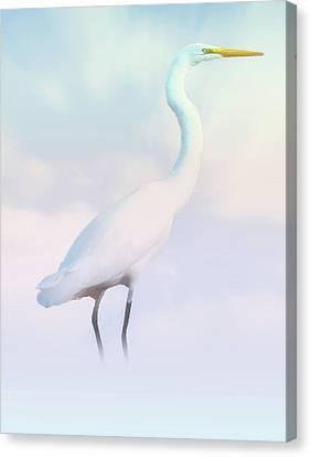 Heron Or Egret Stance Canvas Print