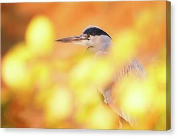 Hidden Heron Canvas Print by Roeselien Raimond