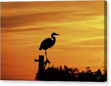 Heron Sunrise Canvas Print by Rick Lawler
