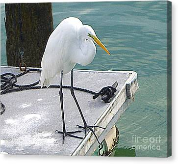 Canvas Print featuring the photograph Heron Waiting by Merton Allen