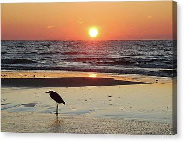 Heron Watching Sunrise Canvas Print