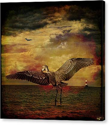 Herons Canvas Print by Chris Lord