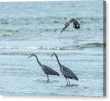 In Shallow Waters Canvas Print