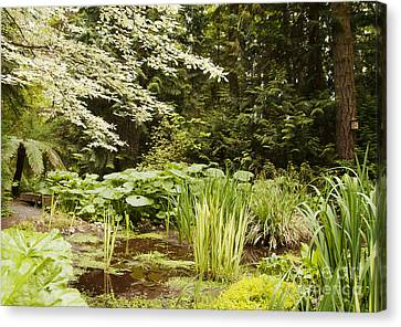 Herronswood Wetlands Canvas Print by Victoria Harrington