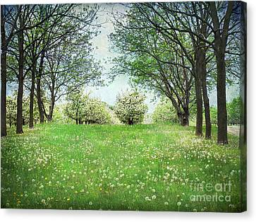 He's In The Orchard Canvas Print by Kathi Mirto