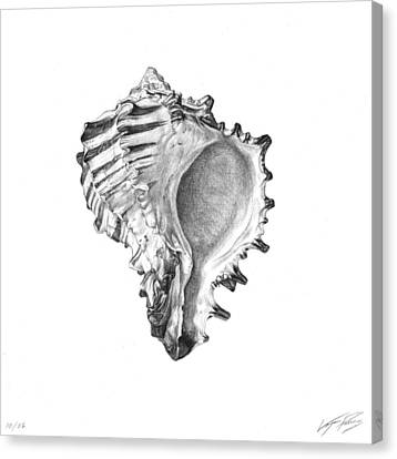 Hexaplex Radix Canvas Print by Logan Parsons