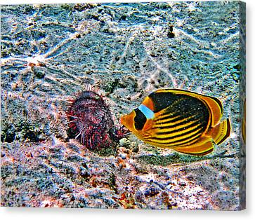 Hey. Underwater World. Canvas Print by Andy Za