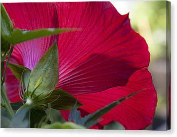 Canvas Print featuring the photograph Hibiscus by Charles Harden