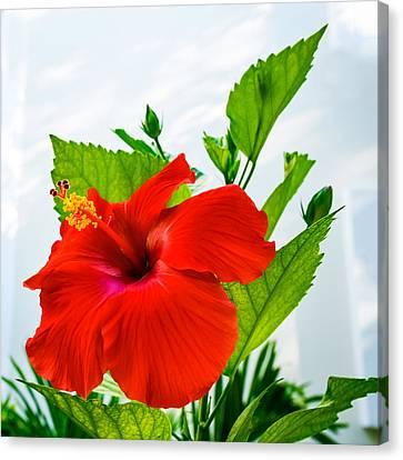 Hibiscus Closeup Canvas Print by Andrew Kazmierski
