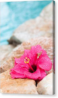 Hibiscus Flower Canvas Print by Amanda Elwell