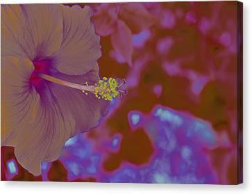 Hibiscus Gllow Canvas Print by Lucrecia Cuervo