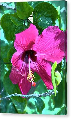 Hibiscus Canvas Print by Gwen Vann-Horn
