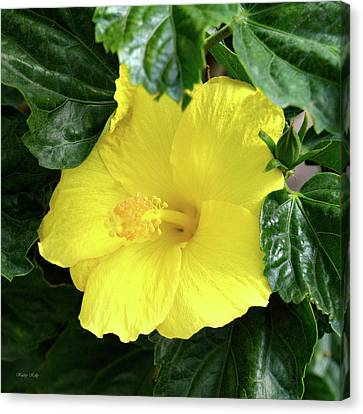 Hibiscus Heaven Canvas Print by Kathy Kelly