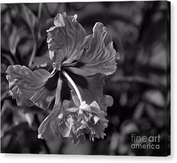 Canvas Print featuring the photograph Hibiscus In Blackwhite by Ken Frischkorn