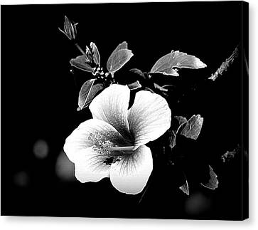 Canvas Print featuring the photograph Hibiscus In The Dark by Lori Seaman