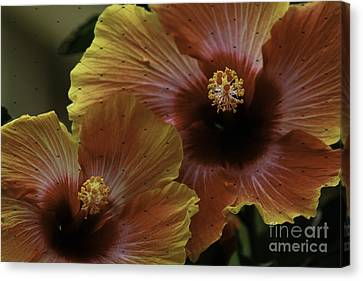 Canvas Print featuring the photograph Hibiscus by Lori Mellen-Pagliaro